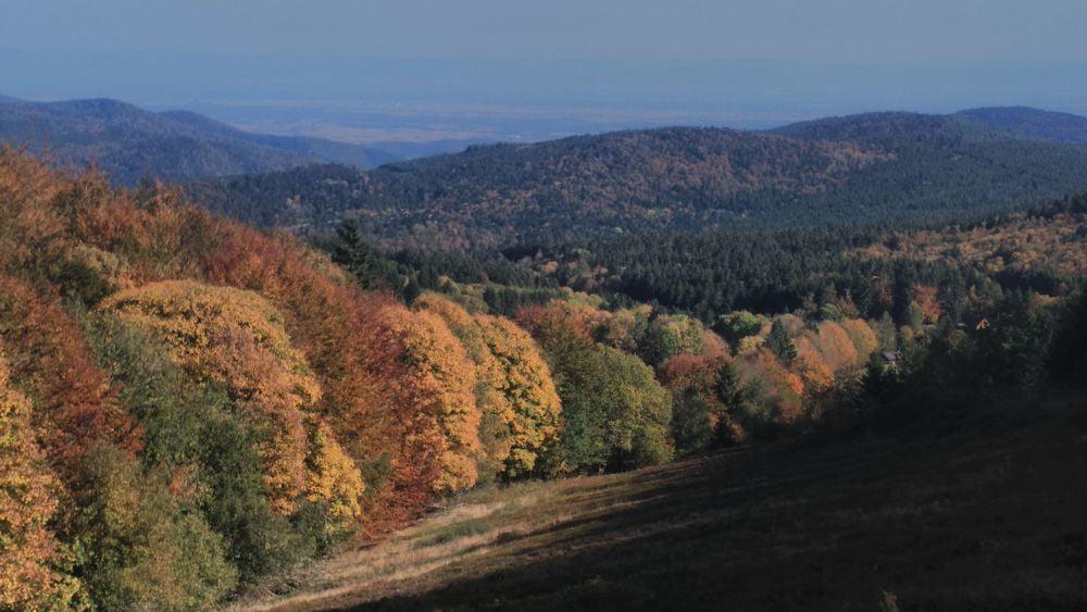 L'automne à la Chaume des veaux